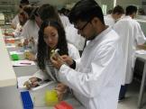 Mit Kittel, Pipette und Eppis wurde im Labor gearbeitet.